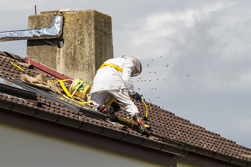 Bee Pest Control in Burnley Lancashire